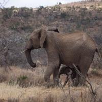 More Mpala Mammals